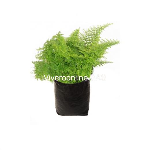Viveroonline.com .co 11